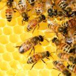 #4 เซรั่มน้ำผึ้ง ดึงผิวเด้งดุจสาวเกาหลี