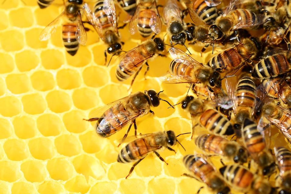 เซรั่มน้ำผึ้ง