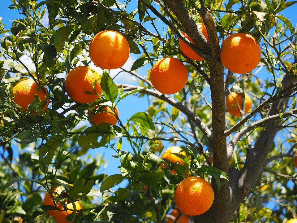โลชั่นส้ม