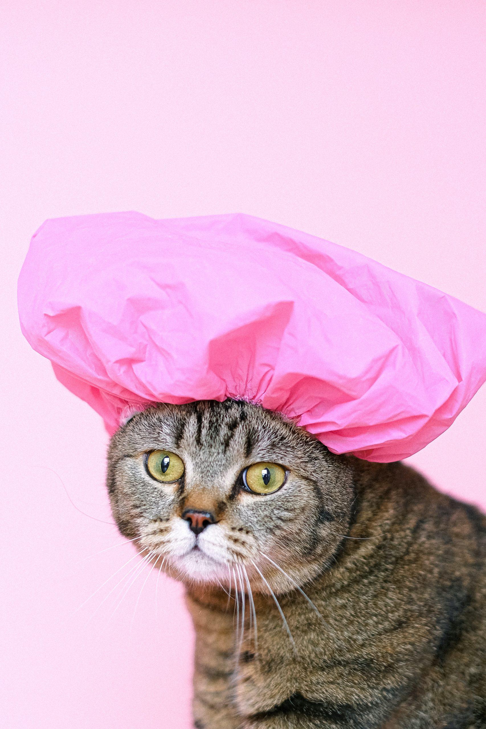 หมวกคลุมผมอาบน้ำ